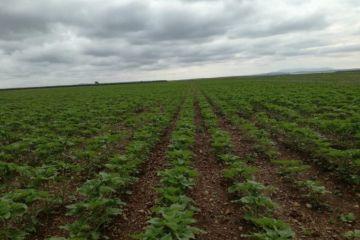 La Agricultura de Conservación reduce hasta en un 90% la tasa de erosión del suelo