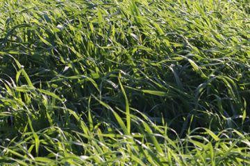 Nuestro suelo agrícola, ese gran desconocido que debemos proteger
